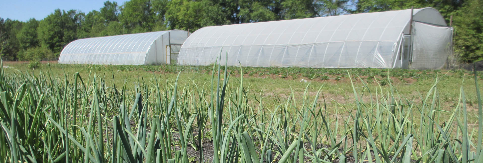 Cover_Crops_02