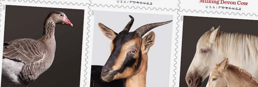 Closeup of heritage breed stamps