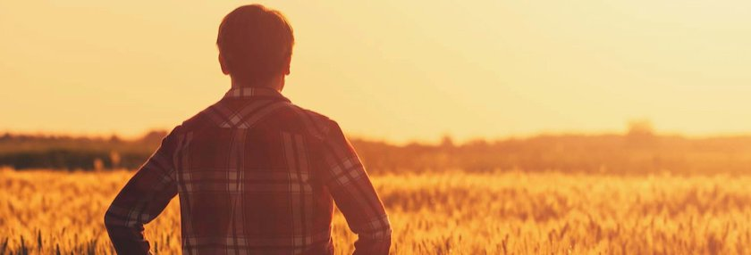 Farmer surveying his crop during harvest