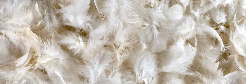 Molt means chicken keepers lose feathers