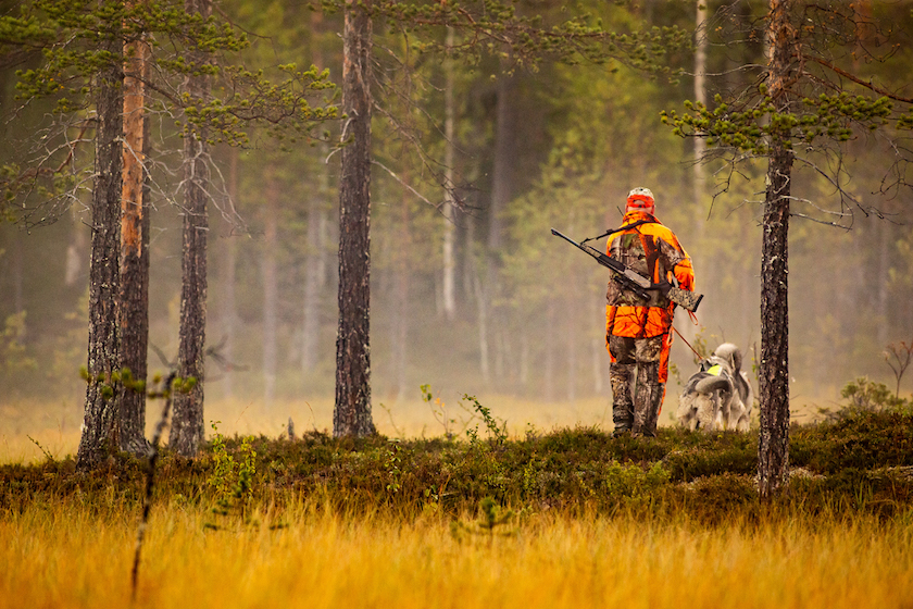 hunter with dogs on leased hunting ground